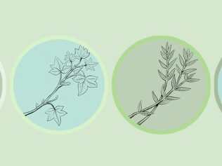illustration of four different plants in circles