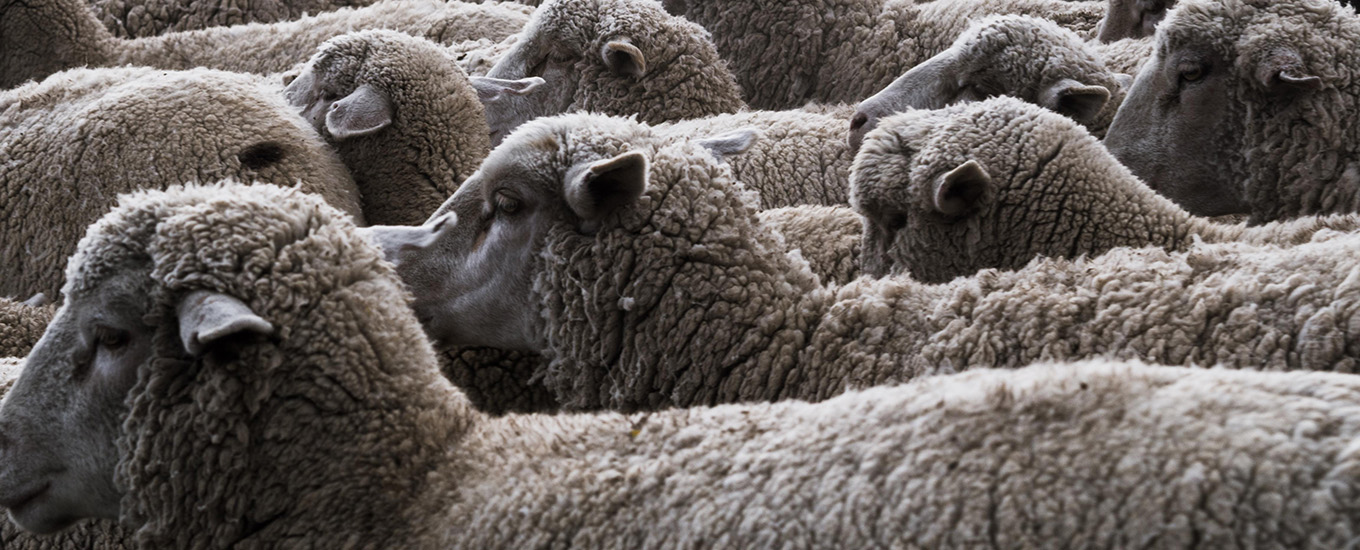 What Drives Herding Behavior in Online Ratings
