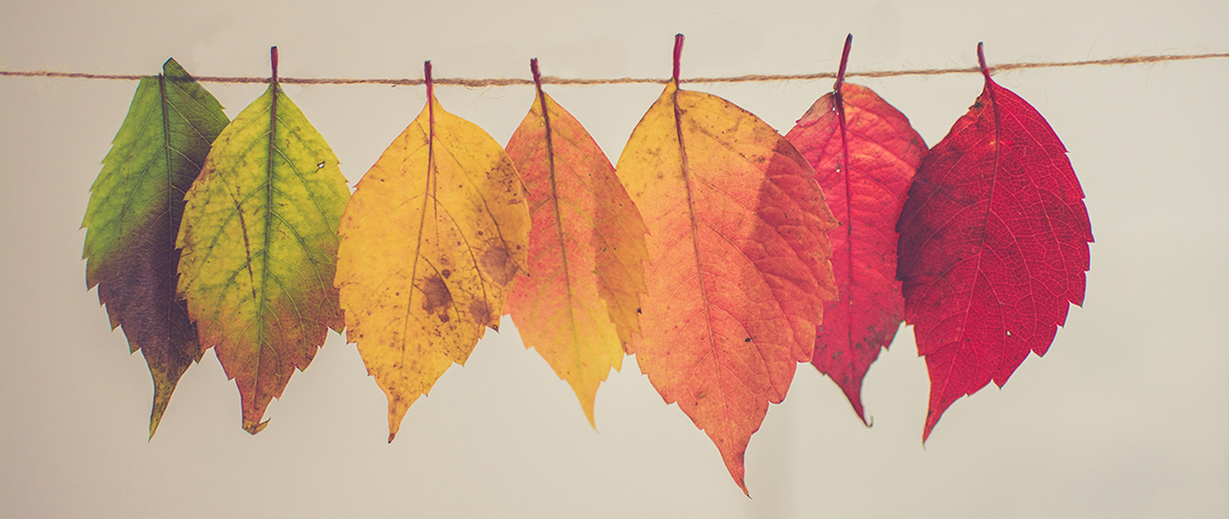 row of leaves of changing color