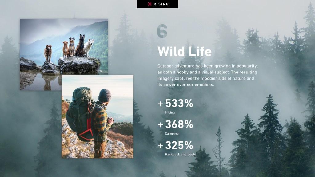 Wild Life slide from Shutterstock's Creative Trends Report