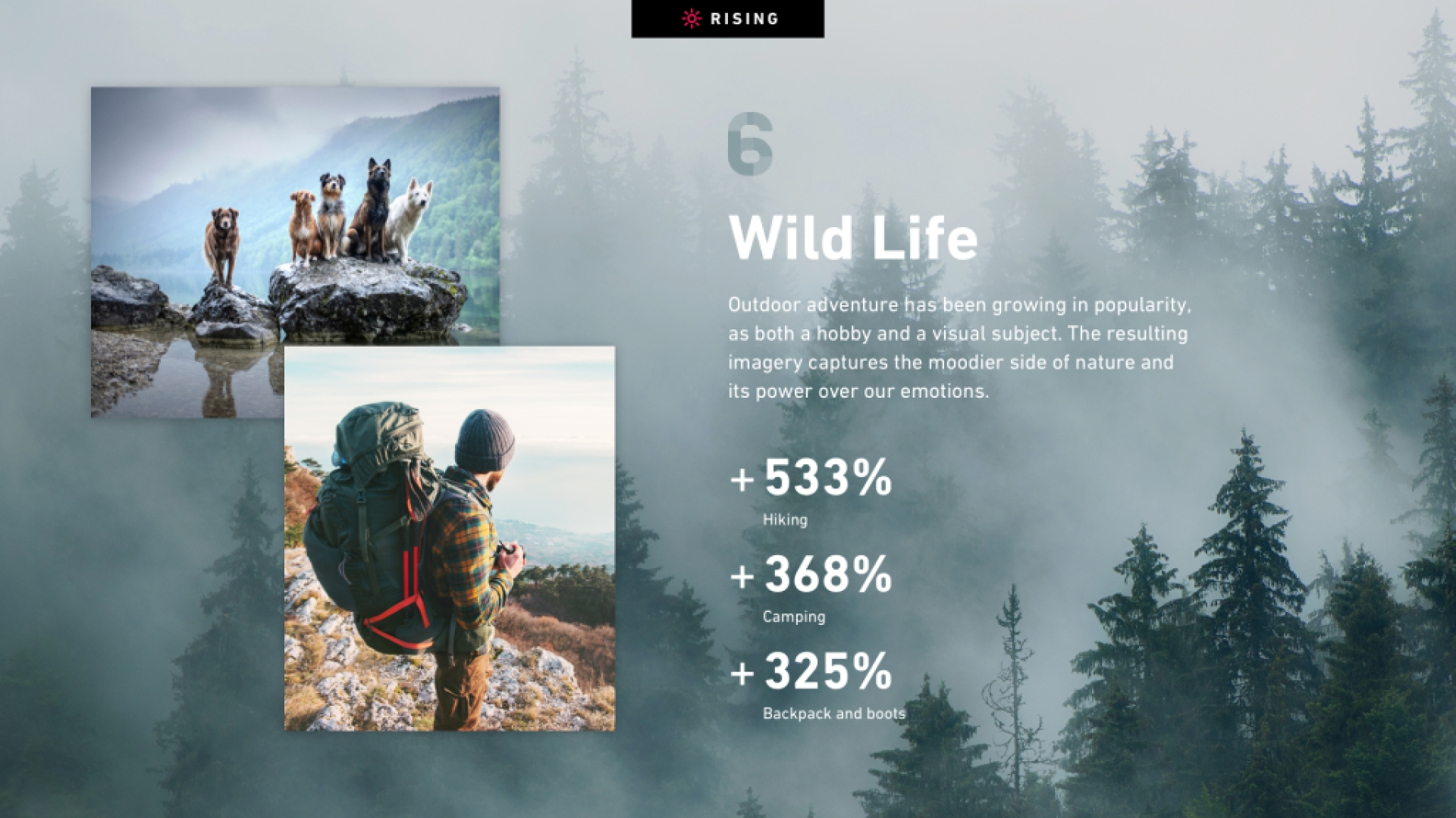 Wild Life slide from Shutterstock's Creative Trends Report