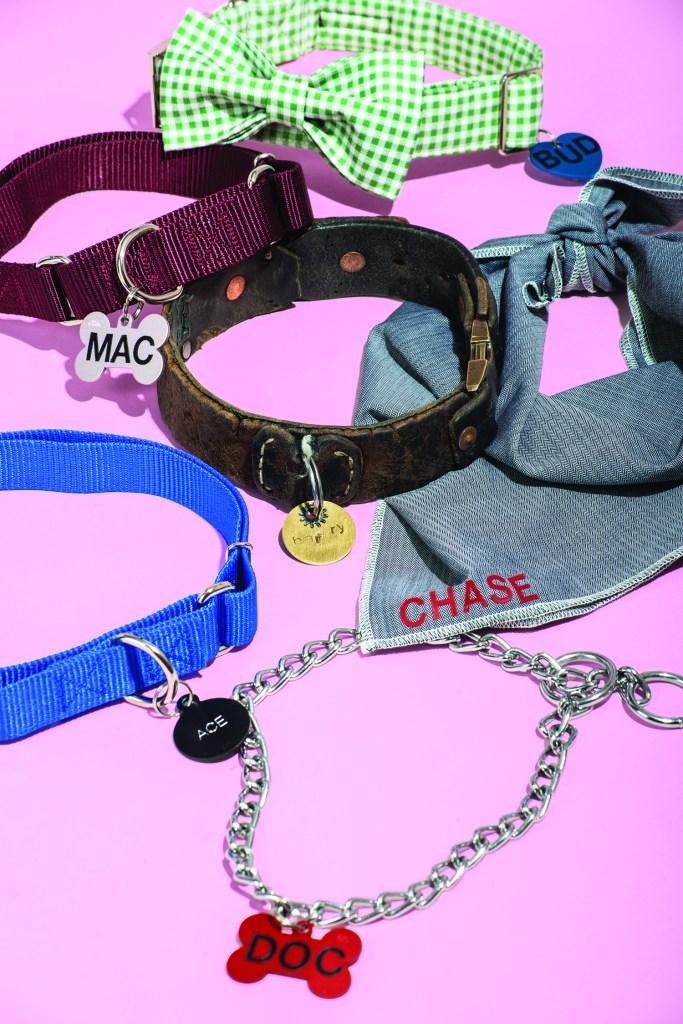 an assortment of dog collars