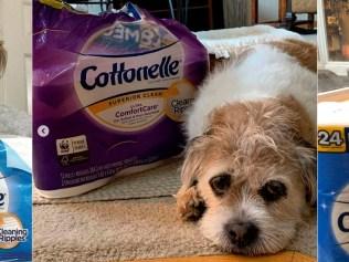 Cottonelle toilet paper in crowdsourced content